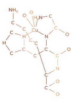 CHK-cu molecule